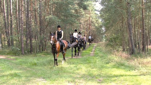 Reiterwochenende in der Lüneburger Heide