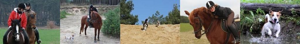 Reiturlaub mit dem Hund